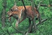 動物:豹.jpg