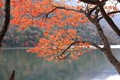 櫻花和椿和紅葉:美如畫.jpg