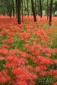 花草植物:1117-1.jpg