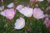 花:花兒.0.jpg