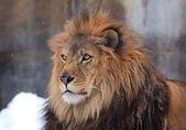 動物:王者の風格.jpg