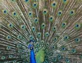 動物:E9547BF5CF79B6DB44147C69070A6.jpg