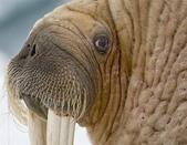動物:海豹.jpg