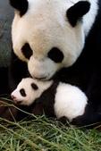 動物:ytw_tpgepa-20130904134055-42792237.jpg