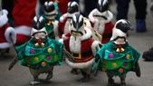 動物:聖誕企鵝逛街.jpg