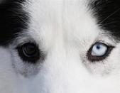動物:陰陽眼.jpg