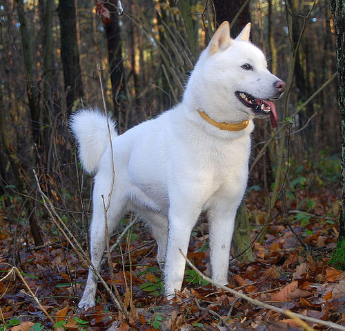 犬 北海道