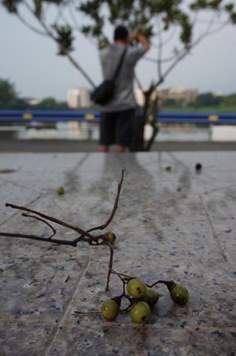 1050807三星攝影社.習拍【台南關廟旺萊公園】-10.JPG - 攝影‧作品