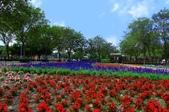 1061126溪州花園:_DSC4517.jpg