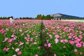 106/11/19后里中社花園:_DSC6847.jpg
