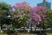 108年2月15日朝馬公園紅花風鈴木:_DSC9861.jpg