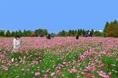 106/11/19后里中社花園:_DSC6849.jpg