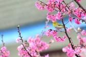 106/3/24安和路倉庫前綠繡眼:DSC_1709.jpg