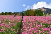 106/11/19后里中社花園:_DSC6839.jpg