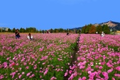 106/11/19后里中社花園:_DSC6843a.jpg