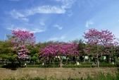108年2月15日朝馬公園紅花風鈴木:_DSC9877.jpg