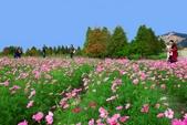 106/11/19后里中社花園:_DSC6854.jpg