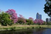 108年2月15日朝馬公園紅花風鈴木:_DSC9890.jpg
