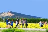 106/11/19后里中社花園:_DSC6856.jpg