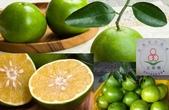 老父親的水果園:蜜柚g.JPG