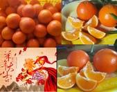 老父親的水果園:美人柑.JPG