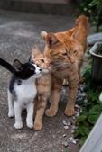 動物園:貓-全家1.jpg