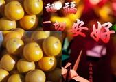 老父親的水果園:帝王柑3.jpg