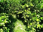 老父親的水果園:30 - 13.jpg