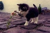 動物園:貓-可愛.jpg