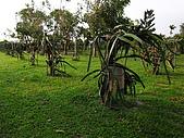 參訪一高雄休閒農場:R0013018.JPG