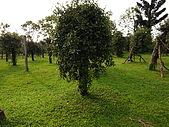 參訪一高雄休閒農場:R0013014.JPG