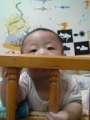 維維5個月:維維 5個月 2012/8/5