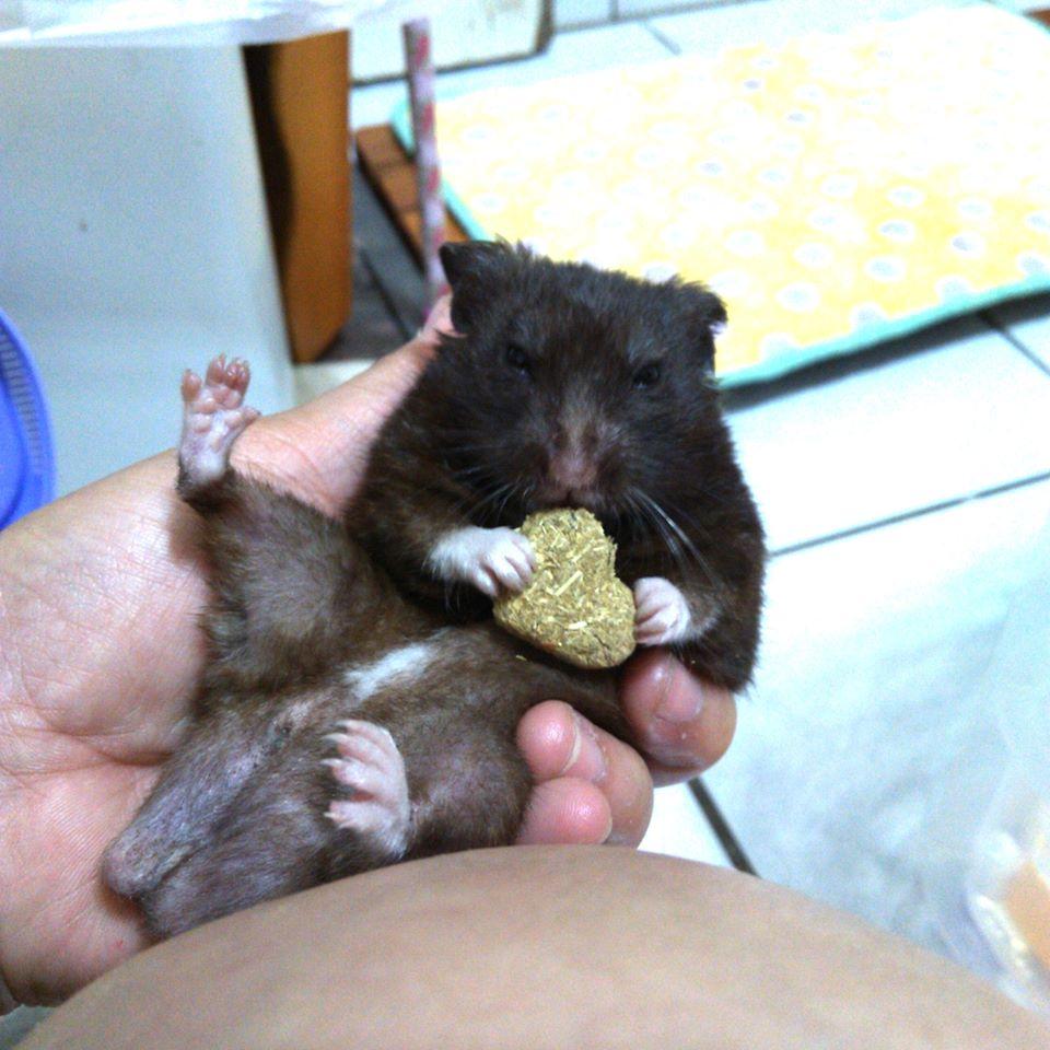 莉莉安卓公主的動物園18:20150601-2.jpg