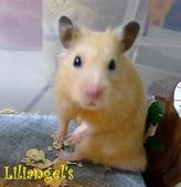 莉莉安卓公主的動物園17:P1120647-1.JPG