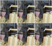 莉莉安卓公主的動物園17:P1120714-6.jpg
