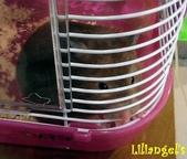 莉莉安卓公主的動物園17:1981447458.jpg