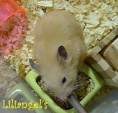 莉莉安卓公主的動物園17:P1120662-1.JPG