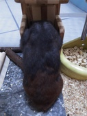 莉莉安卓公主的動物園18:20150406哈姆界的時尚型男黑色夾克配棕色褲子還有白領帶.jpg