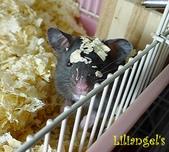 莉莉安卓公主的動物園17:P1120740-1.JPG