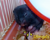 莉莉安卓公主的動物園17:P1120749-1.JPG