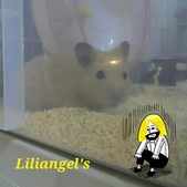 莉莉安卓公主的動物園17:1981447466.jpg