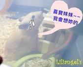 莉莉安卓公主的動物園17:1030216-1.JPG