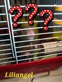 莉莉安卓公主的動物園17:1981447468.jpg