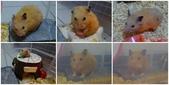 莉莉安卓公主的動物園17:1030209-6.jpg