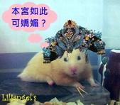 莉莉安卓公主的動物園17:1981447480.jpg