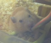 莉莉安卓公主的動物園17:P1120607-1.JPG