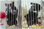 莉莉安卓公主的動物園17:P1120705-2.jpg
