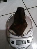 莉莉安卓公主的動物園18:20141113大屁股的重量.jpg