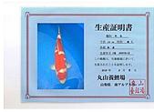 御三家錦鯉(來自福爾摩莎及台灣錦鯉網的超級錦鯉相片):cert-1.jpg