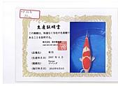 御三家錦鯉(來自福爾摩莎及台灣錦鯉網的超級錦鯉相片):cert-6.jpg